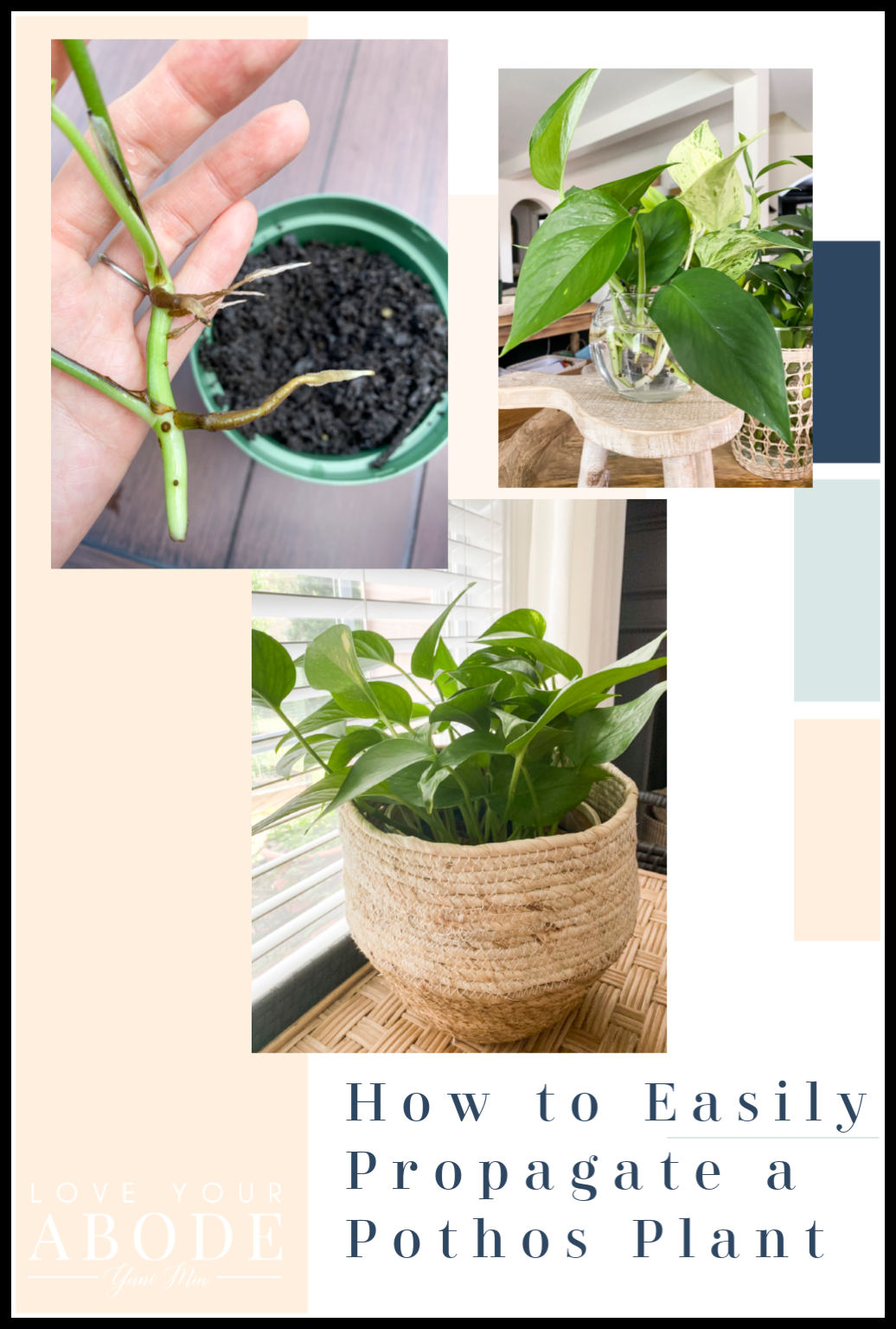 How To Propagate Your Pothos Plant Love Your Abode